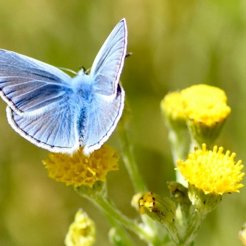 vlinder-fotoclass